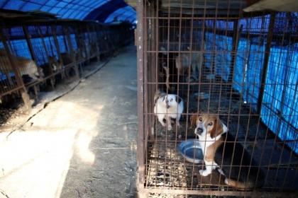 韓国でスープになる直前の犬を救出! ベトナムでは犬食が国際問題に