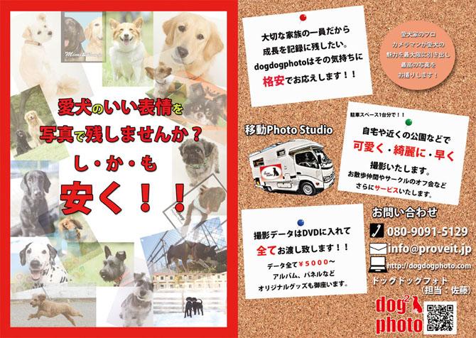 犬専門の写真撮影サービス dogdogphoto